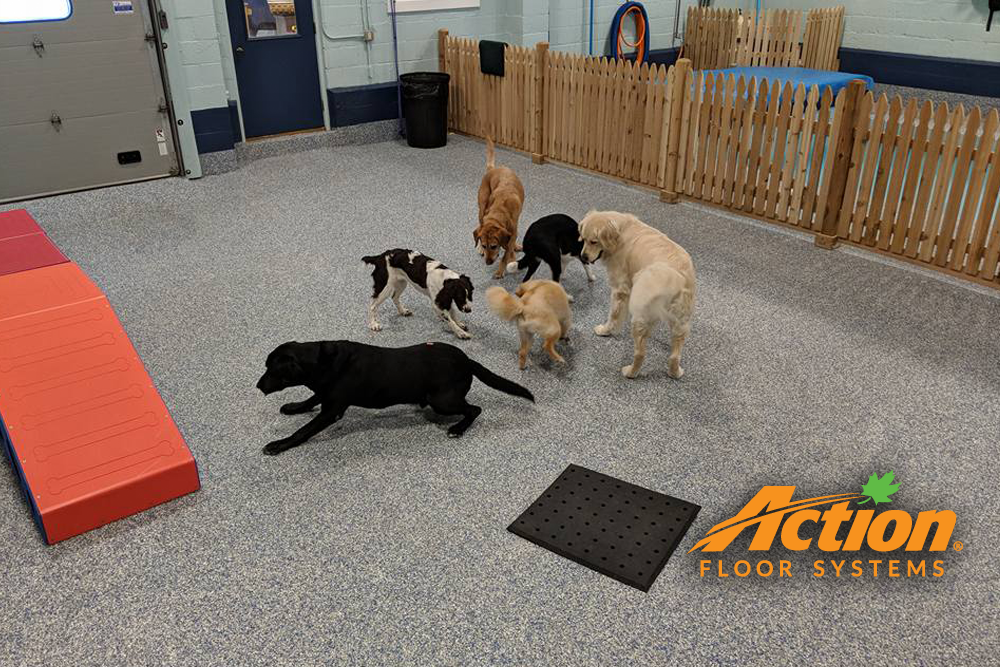 dogs at doggy daycare